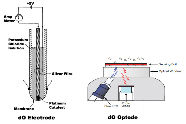 File:DO Electrodes.jpg