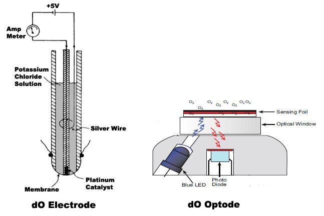 Oxygen on Oxygen Sensor